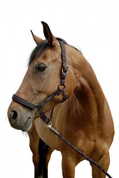 Pferdehalfter für GoLeyGo-System