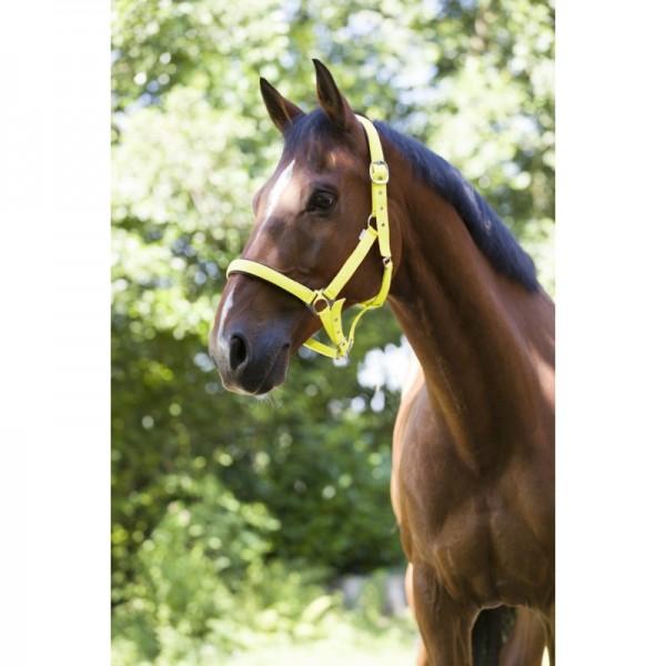 Norton FLUO zweilagiges Halfter am Pferd gelb